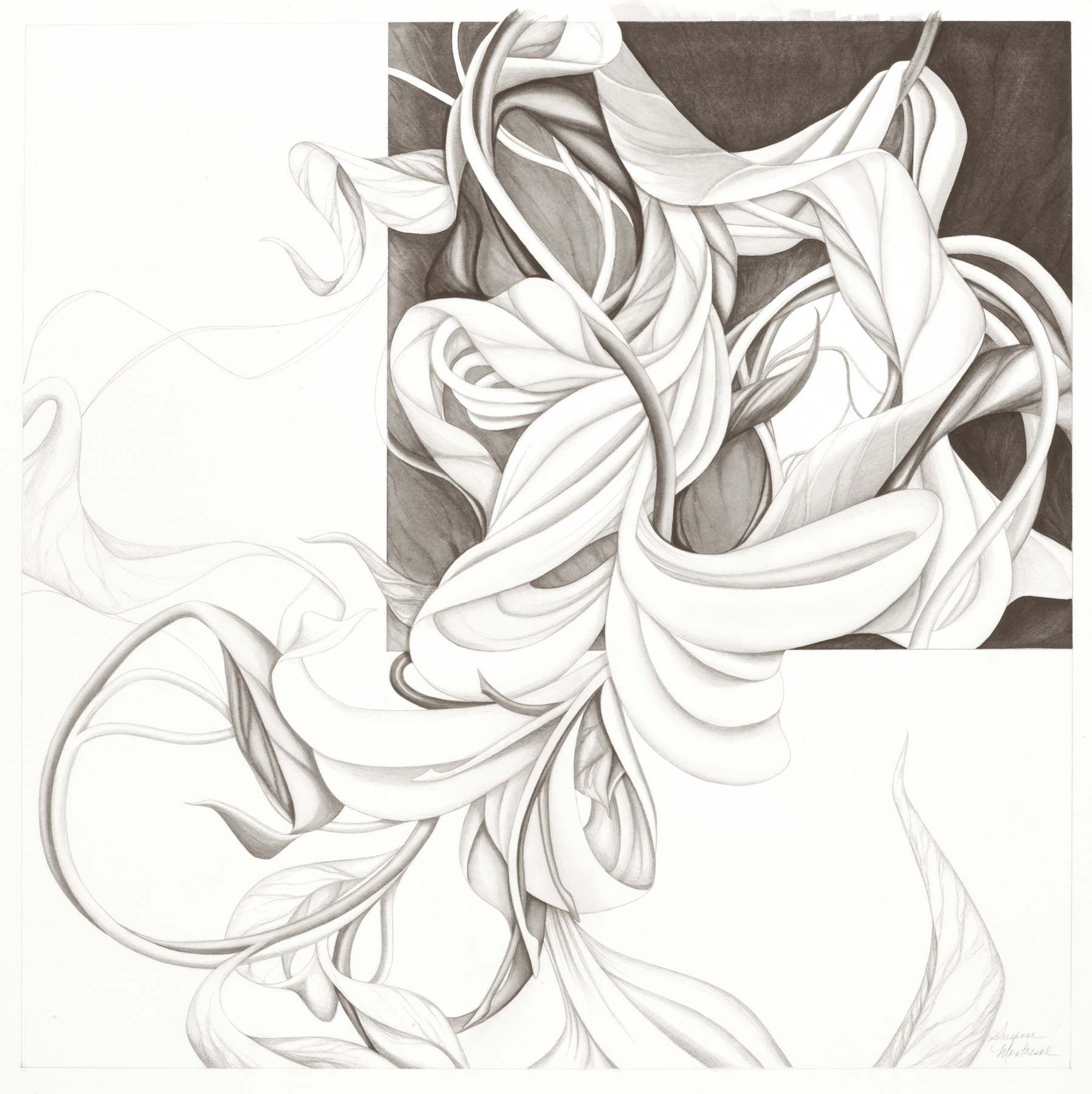 """Suzanne Montresor, Concerto 5, Graphite and watercolor, 28""""x28"""", $1,200"""
