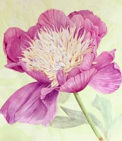 "Lorie Gurian, Peony, Watercolor, 18""x24"", $600"