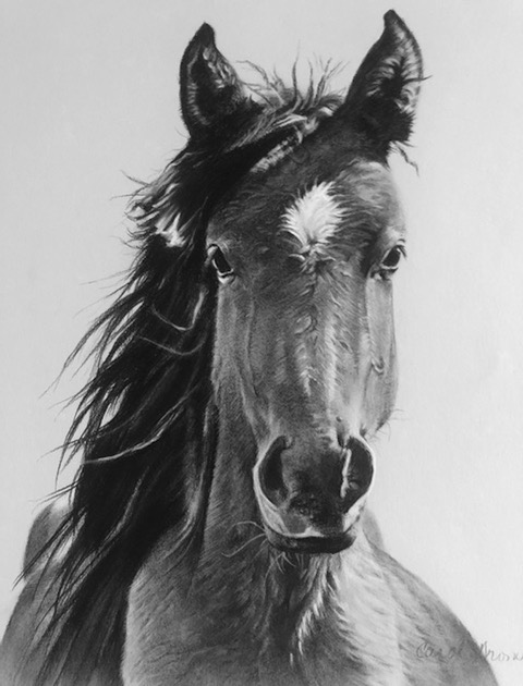 "Carol Gromer, Wild, Wild Horses, Charcoal, 25""x23"", $3,000"