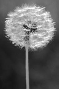 "Marissa Grimaldi Kam, The Magic of Wishes, Photo, 8""x12"", $210"