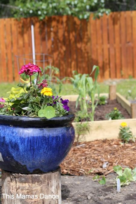 blue pot in the garden
