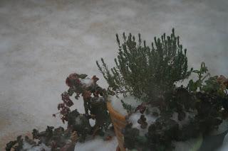 jugar con la nieve