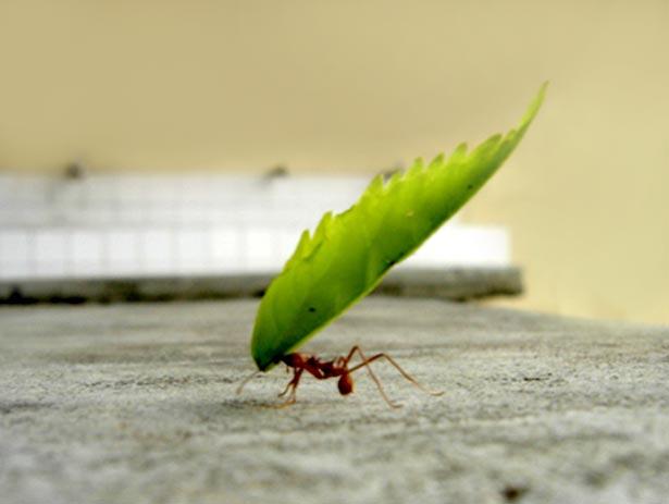 Gael y.... la hormiga 24