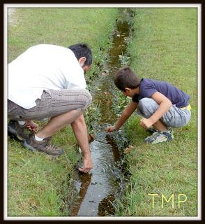 Galicia verano buscando ranas todomundopeques