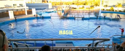 Mamás Full Time Océanos Mares Delfines