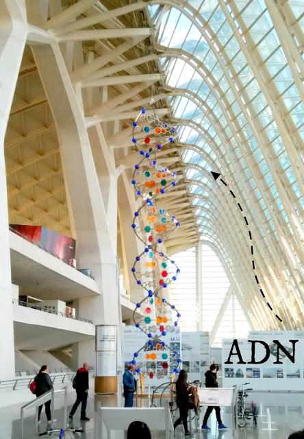Museo de la ciencia Valencia