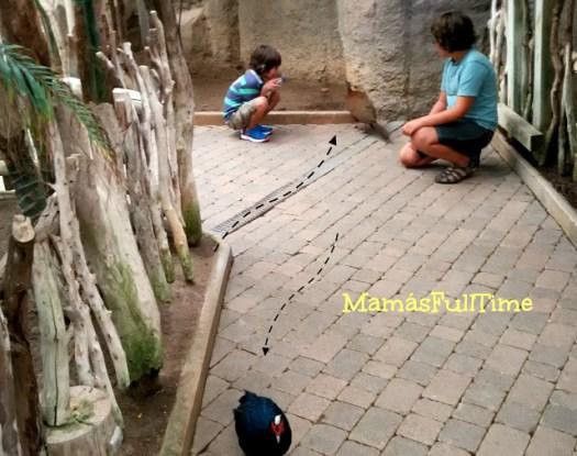 Hábitats animales descubrimientos niños aprender