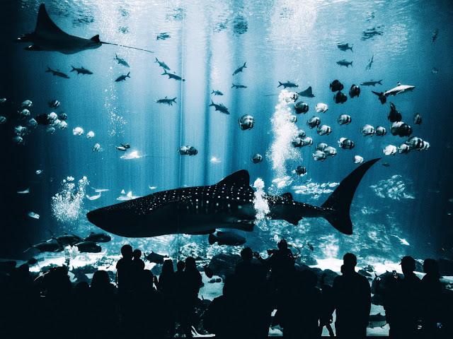 acuario lonja Santa Pola
