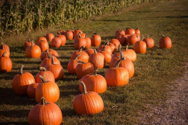 recetas de otoño saludables