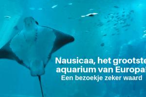 Vakantie tip| Nausicaa, het grootste aquarium van Europa