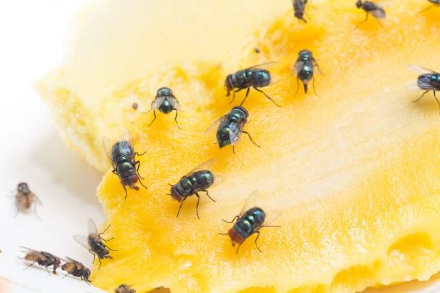 Fruitvliegjes - insecten in huis