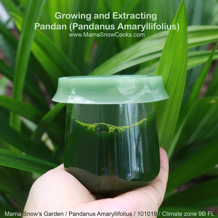 Growing & Extracting Pandan