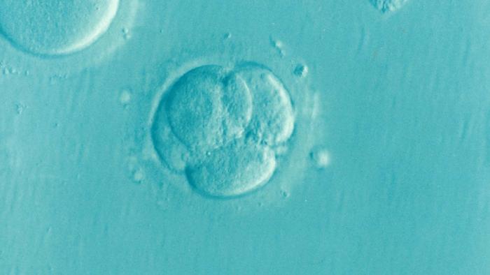 embrion-fiv-ici-iad