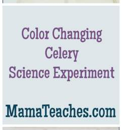 Color Changing Celery Experiment - Mama Teaches [ 3081 x 1026 Pixel ]