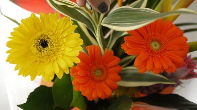 photo-fleurs-5