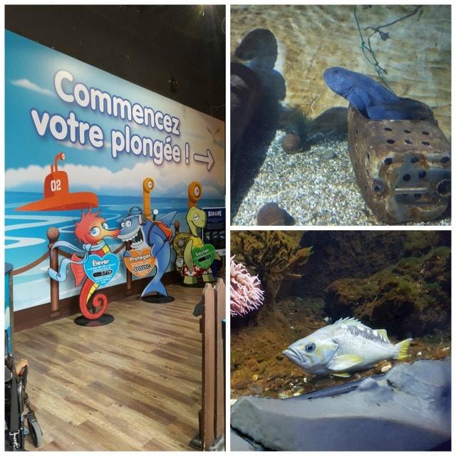 Avis aquarium Sealife 1