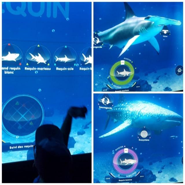Avis aquarium Sealife 2