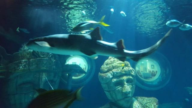 Avis aquarium Sealife