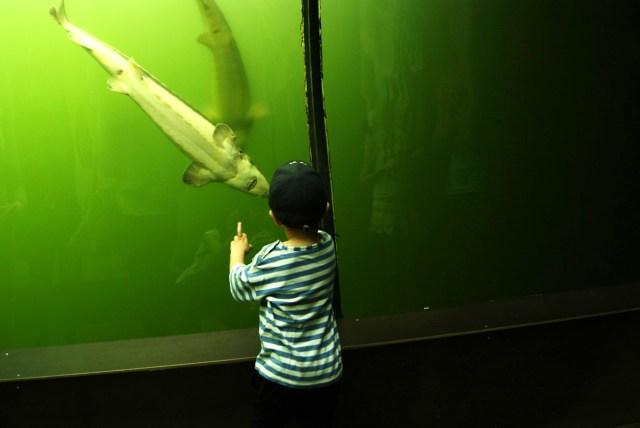 akvarium morava
