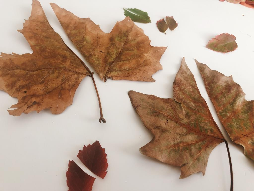 actividades de otoño con hojas