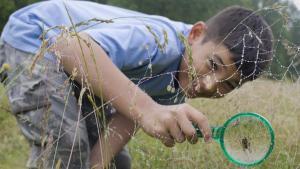 ¿Cómo protegerse de la araña violinista?