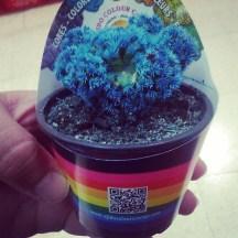 Blue mutant cactus