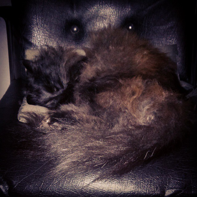 Black cat on black chair #ChairOccupy #NinjaMode #pets #cats #animals