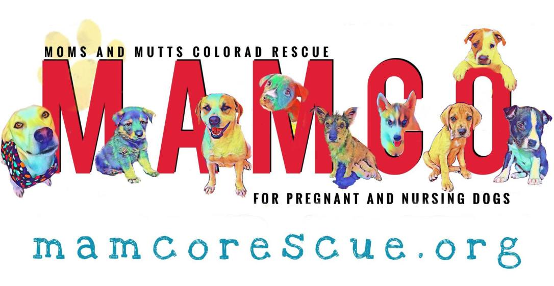 Mamcorescueorg Moms And Mutts Colorado Rescue For Pregnant And