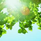 まだ夏らしい季節の画像