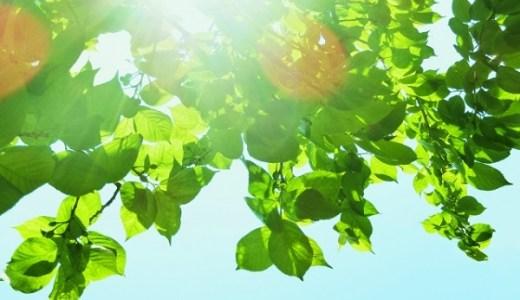 秋暑の候の例文や意味、時期はいつからいつまで?