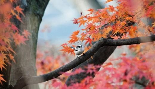 石神井公園の紅葉の見頃はいつ?【2018年版】