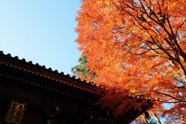 高尾山の紅葉
