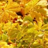 黄葉の画像