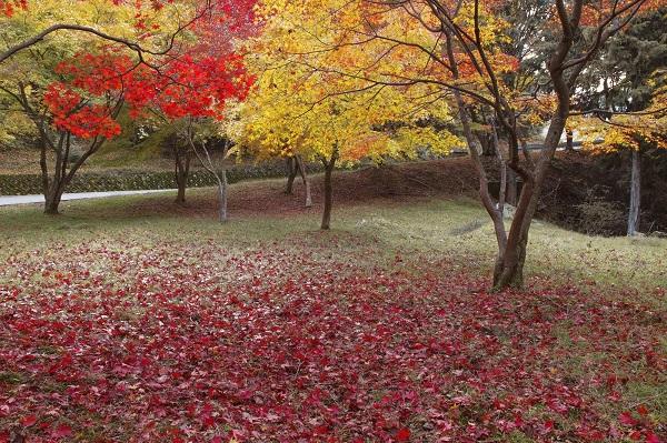 11月の風景