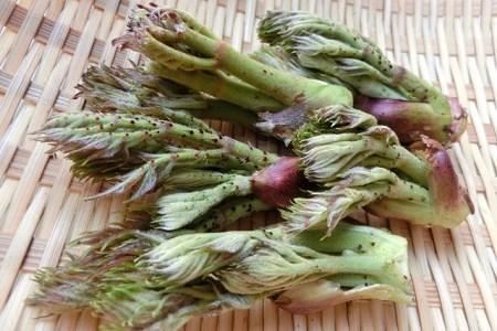 タラの芽とコシアブラの違いは?似ている山菜の見分け方