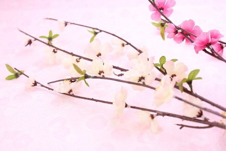 向春の候の読み方や意味は?正しい使う時期を考察