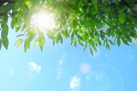 深緑の候を使う時期はいつ?簡単な文例や意味も紹介
