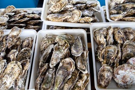 広島の牡蠣と宮城の牡蠣の違い!どっちが美味しいの?
