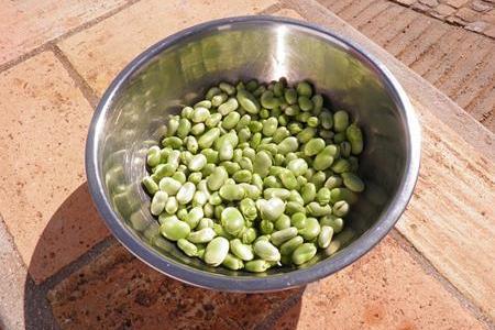 そら豆は食べ過ぎると太ったり健康に悪い?カロリーや栄養を考える