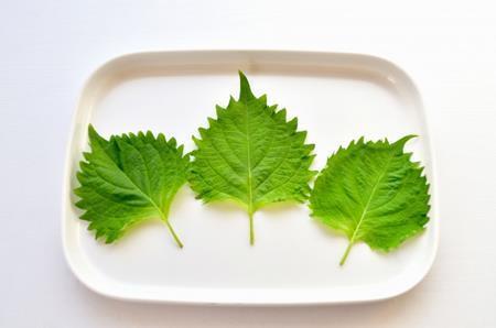 大葉とシソとえごまの違いとは?同じ食べ物なの?