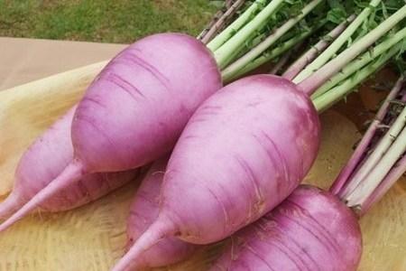 紫大根という赤い大根の味の特徴と食べ方は?煮物にすると色がうつる?