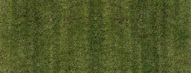 Grass background - Free High Resolution Grass and Leaf Textures