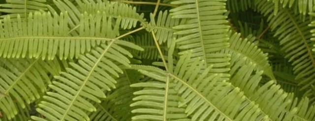 fern leaf - Free High Resolution Grass and Leaf Textures