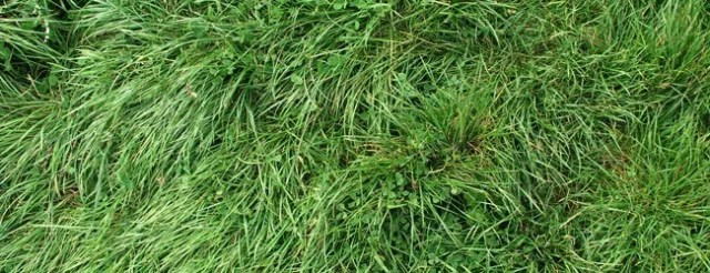 long green grass - Free High Resolution Grass and Leaf Textures