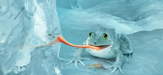 frog - Photoshop (Killer) Tutorials and Tips For Graphic Designers