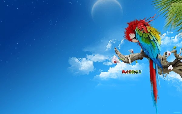 The Parrot by termapix - Amazing high resolution wallpapers #3