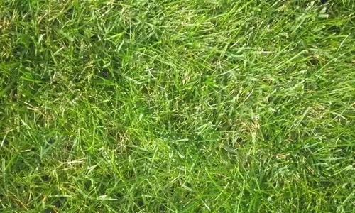 19 Grass 18 - Seamless and High Resolution Grass Textures