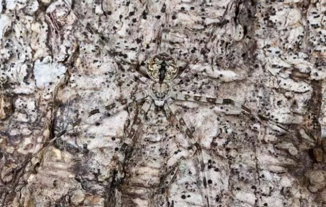 camouflage spider 1808420i - Hidden Animals Photos That You Can't Spot