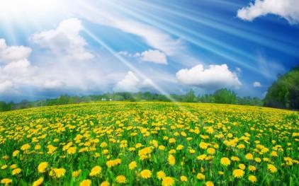 primavară - vară, păpădii
