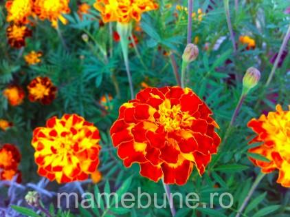 flori-de-toamnă